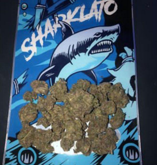 Buy sharklato online