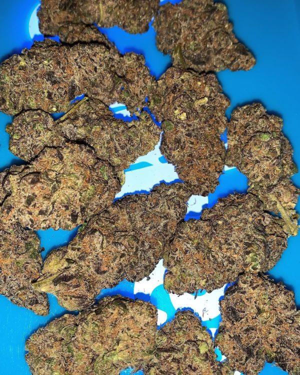 Buy Berner cookies strain