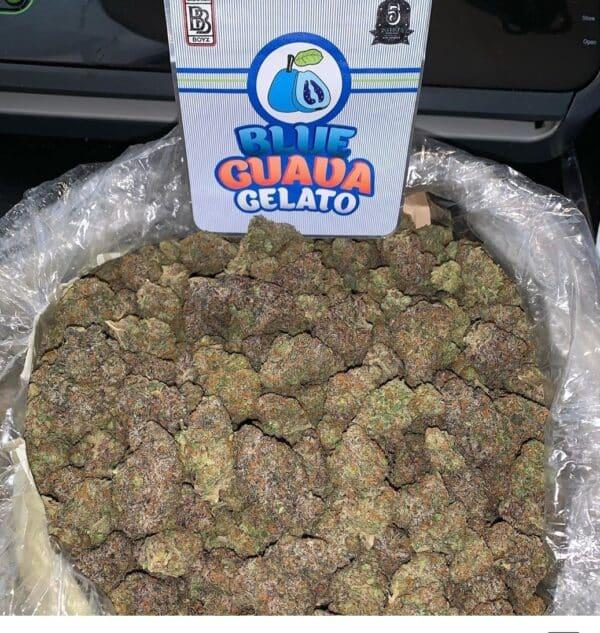 Buy guava gelato