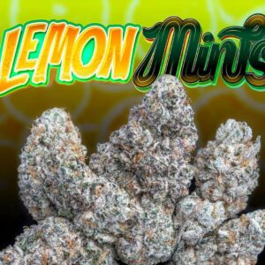 Buy Lemon Mints strain