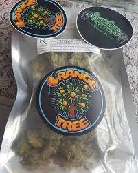 Buy Orange Tree strain