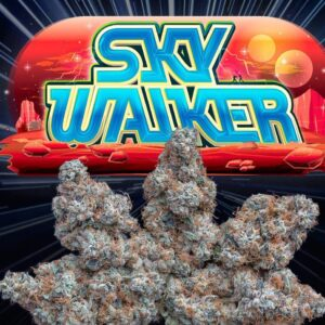 Buy jungle boys Sky Walker