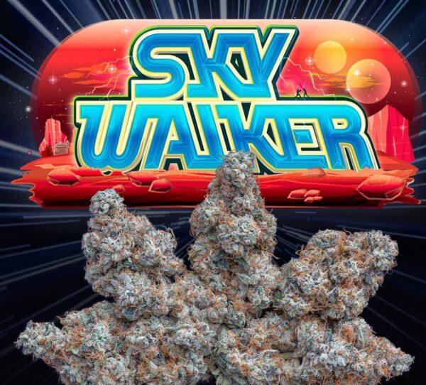 Buy jungle boys Sky Walker