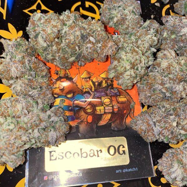 Buy Escobar OG strain