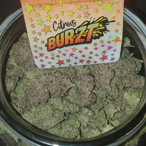 Buy Citrus Burzt strain