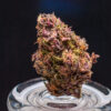 Buy Pink Candy strain