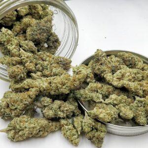 Buy G13 strain Online